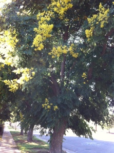 Beautiful yellow blossoms are drawing the bees and covering the ground with pollen.